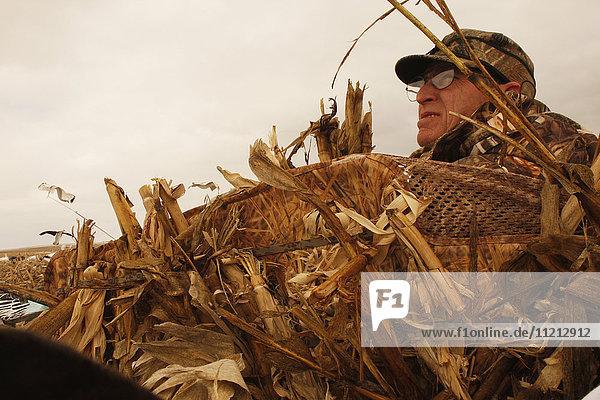 Snow Goose Hunter In Blind