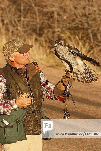 Falconer With Falcon