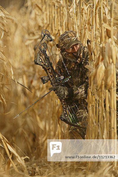 Big Game Bowhunter In Corn Field