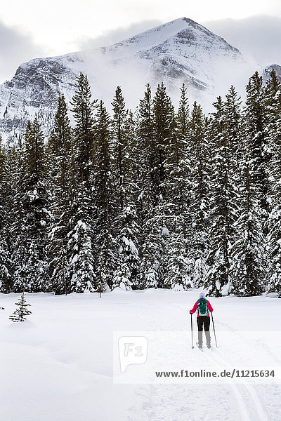 'Female cross country skier on groomed trail with snow covered trees; Lake Louise  Alberta  Canada'