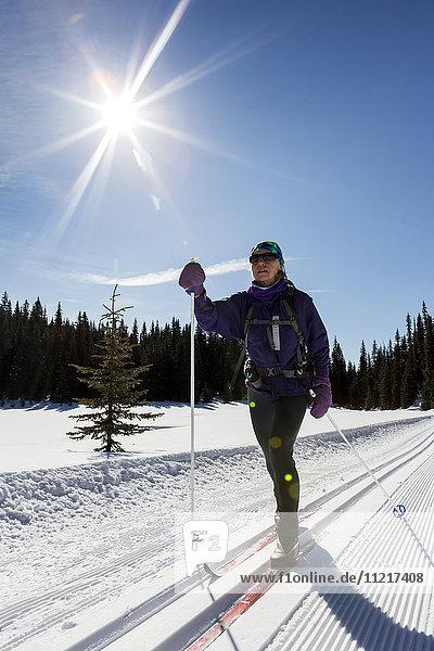 'Female cross country skier on freshly groomed ski trail with sun burst and blue sky; Alberta  Canada'