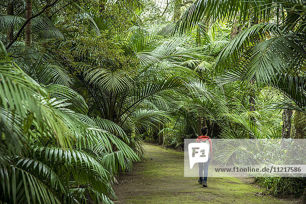 'Young woman walking in Terra Nostra Botanical Park; Furnas  Sao Miguel  Azores  Portugal'