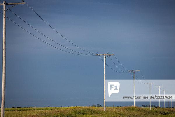 'Electrical wires and poles across farmland against a dark blue sky; Saskatchewan  Canada'