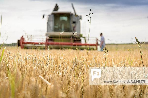 Landwirt inspiziert Mähdrescher auf einem Feld mit Bio-Gerste