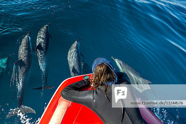 Taucher beobachten die Kapsel der Pantropischen Delfine beim Durchbruch in die Luft  Port St. Johns  Südafrika