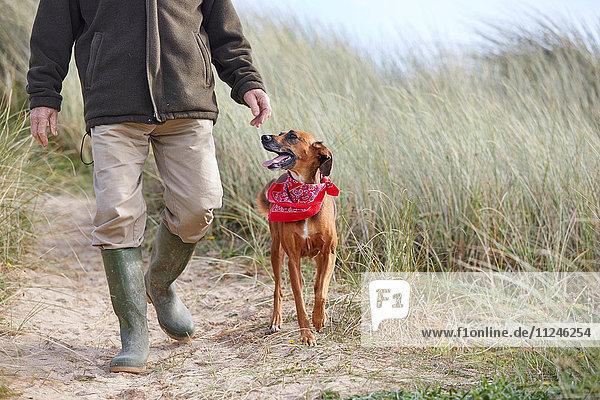 Mann geht mit seinem Haushund auf Sanddünen spazieren  Constantine Bay  Cornwall  UK
