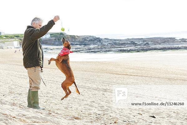 Mann und Hund am Strand  Constantine Bay  Cornwall  UK
