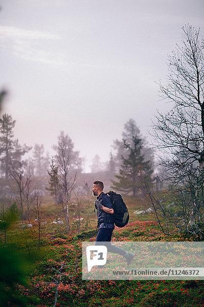 Wanderpark  Sarkitunturi  Lappland  Finnland