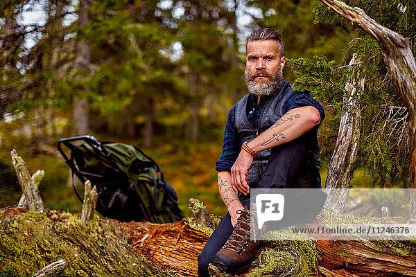 Wanderer ruht sich auf umgestürztem Baum aus  Sarkitunturi  Lappland  Finnland