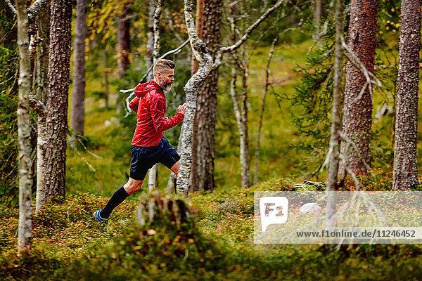 Im Wald laufender Mann  Kesankitunturi  Lappland  Finnland