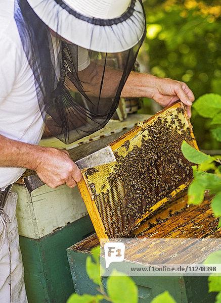 Beekeeper holding honeycomb Beekeeper holding honeycomb