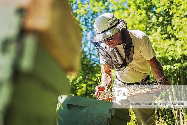 Hope  Beekeeper holding honeycomb