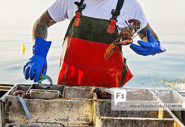 Fisherman throwing lobster Fisherman throwing lobster