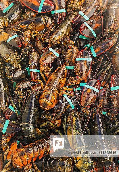 Full frame of fresh lobsters Full frame of fresh lobsters
