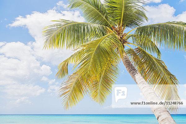 Palm tree against sea