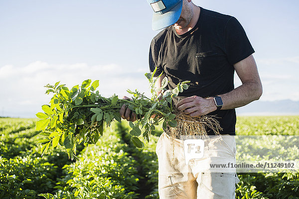 Mature man holding green plant