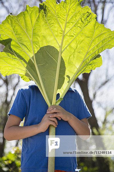 Portrait of boy (6-7) hiding behind large rhubarb leaf