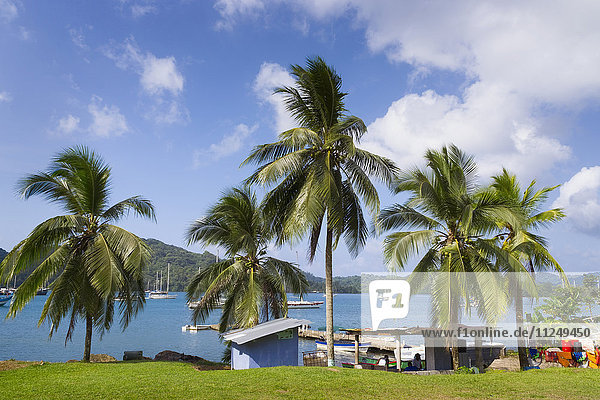 Palm trees growing by bay