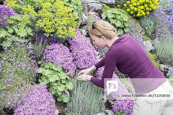 Woman picking flower growing in flowerbed