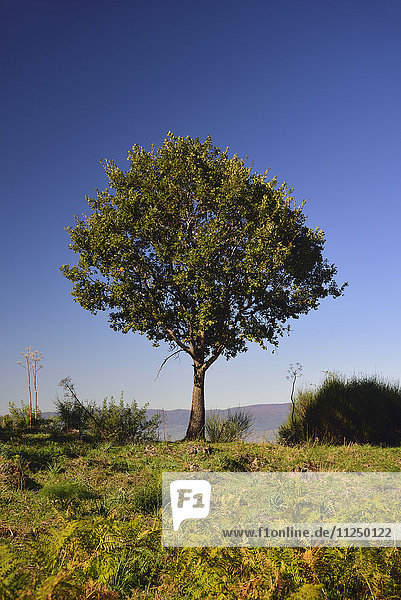 Green tree growing on Mt Etna