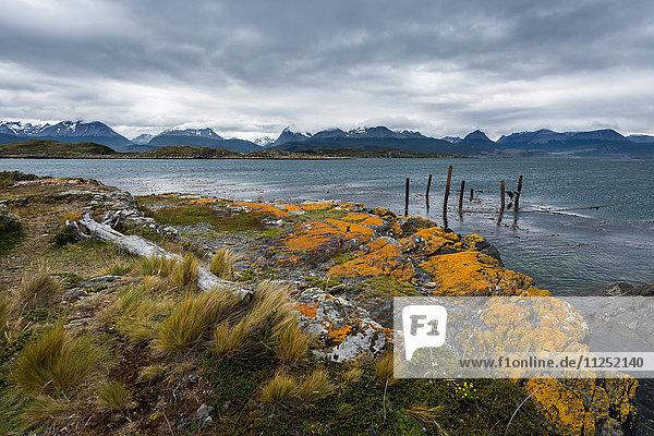 Argentina  Patagonia Tierra del Fuego National Park  Ushuaia Beagle Channel Bridges Islands
