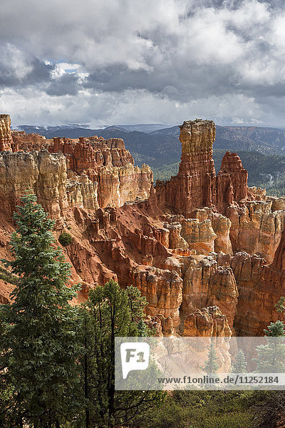 Black Birch Canyon. Bryce Canyon National Park  Garfield County  Utah  USA.