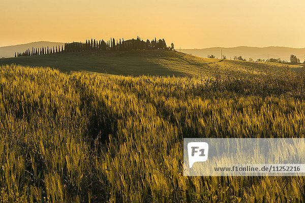 Tuscany hills at sunrise  Val d'Orcia  Tuscany Italy.
