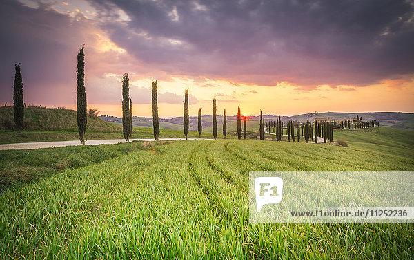 Podere Baccoleno  Asciano  Crete senesi  Tuscany  Italy