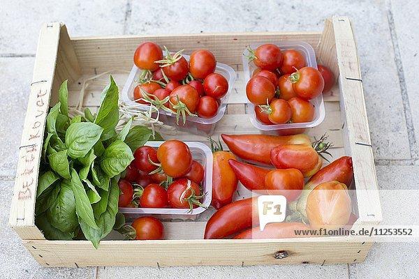 Verschiedene Tomatensorten und ein Bund Basilikum in Spankiste
