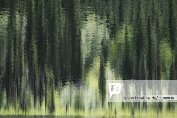 Abstract reflection of green trees in calm water  British Columbia  Canada