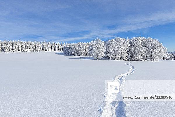 Snow Covered Winter Landscape with Snowshoe Trail  Schauinsland  Black Forest  Freiburg im Breisgau  Baden-Wurttemberg  Germany
