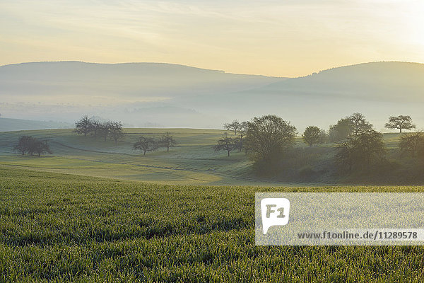 Countryside on Misty Morning  Monchberg  Spessart  Bavaria  Germany