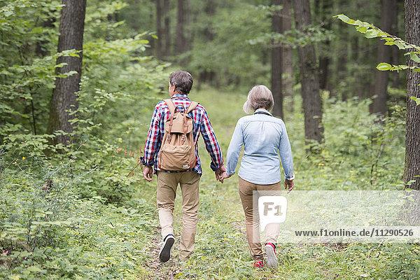 Rückansicht des Seniorenpaares  das Hand in Hand im Wald geht.