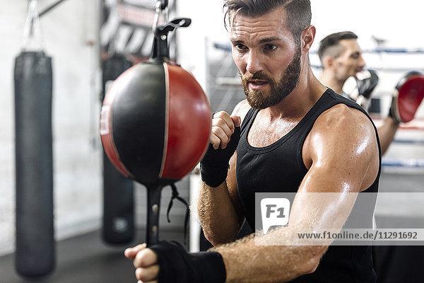 Boxertraining beim Punchingball
