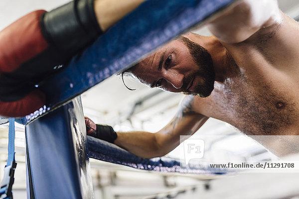 Boxer ruht im Boxring