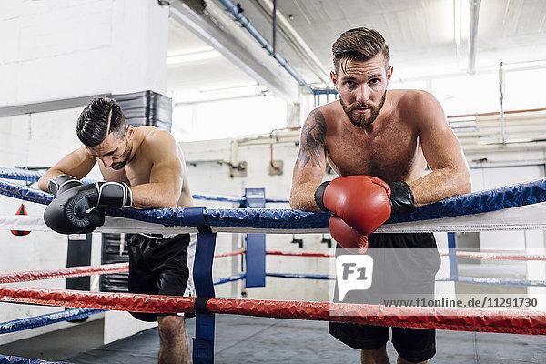 Zwei Boxer im Boxring liegend