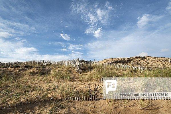 Zäune zum Dünenschutz an der Atlantikküste  La Tranche-sur-Mer  Frankreich  Europa