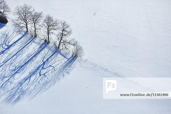 Baumreihe auf einer Weide  Baden-Württemberg  Deutschland  Europa