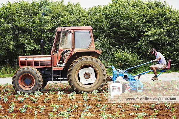 Zwei Männer fahren einen Traktor und ziehen einen Kultivator  der zwischen den Pflanzenreihen Unkraut jätet.