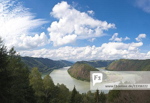 Danube  Upper Austria  Schlögener loop  noose  river  flow  wood  forest  Austria