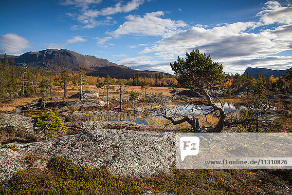 Mountains  trees  Europe  rock  cliff  autumn  autumn colors  scenery  landscape  Lapland  moor  Swede  lake  Scandinavia  stones  Stora Sjöfallets  national park  marsh  water