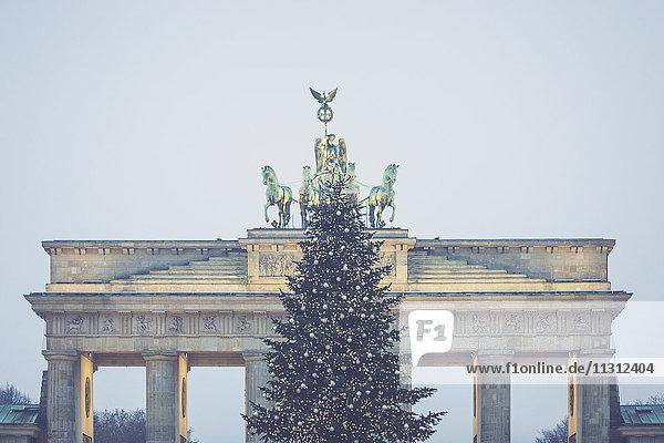 Deutschland  Berlin  Weihnachtsbaum vor dem Brandenburger Tor