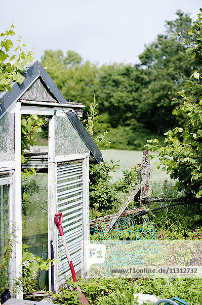 Greenhouse in back yard