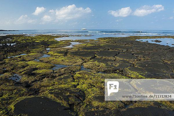 USA  Vereinigte Staaten  Amerika  Hawaii  Big Island  North Kona  Coast  Kaloko-Honokohau National Historic Park  coast