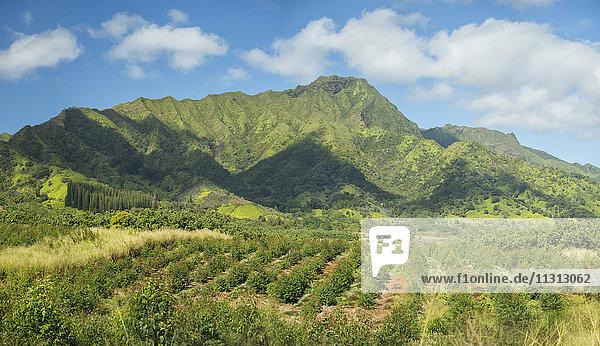 USA  Vereinigte Staaten  Amerika  South Pacific  Hawaii  Kauai  Lihue  Mt. Waialaale