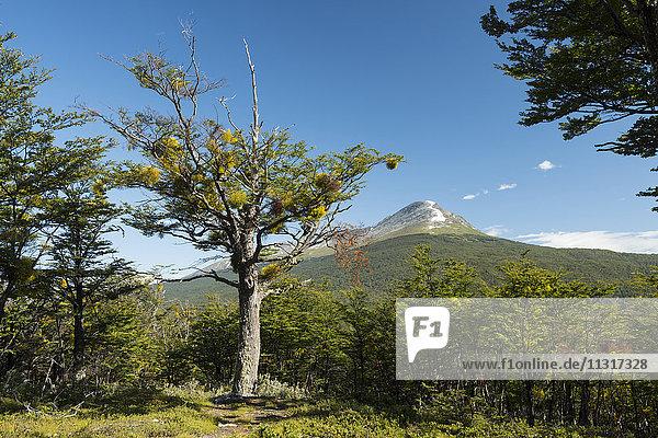 South America  Tierra del Fuego  Argentina  Ushuaia  Tierra del Fuego  National Park