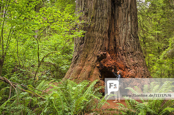 USA  California  West Coast  Crescent City  Redwood National and State Park  woman with giant Sequoia Redwoods tree  MR 0009