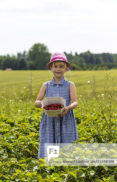 Little girl showing picked strawberries on strawberry field