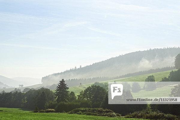 Deutschland  Baden-Württemberg  Nebelhügel im Schwarzwald