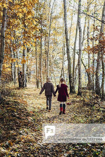 Hänsel und Gretel  Junge und Mädchen gehen allein im Wald  Hexe wartet hinter Baum